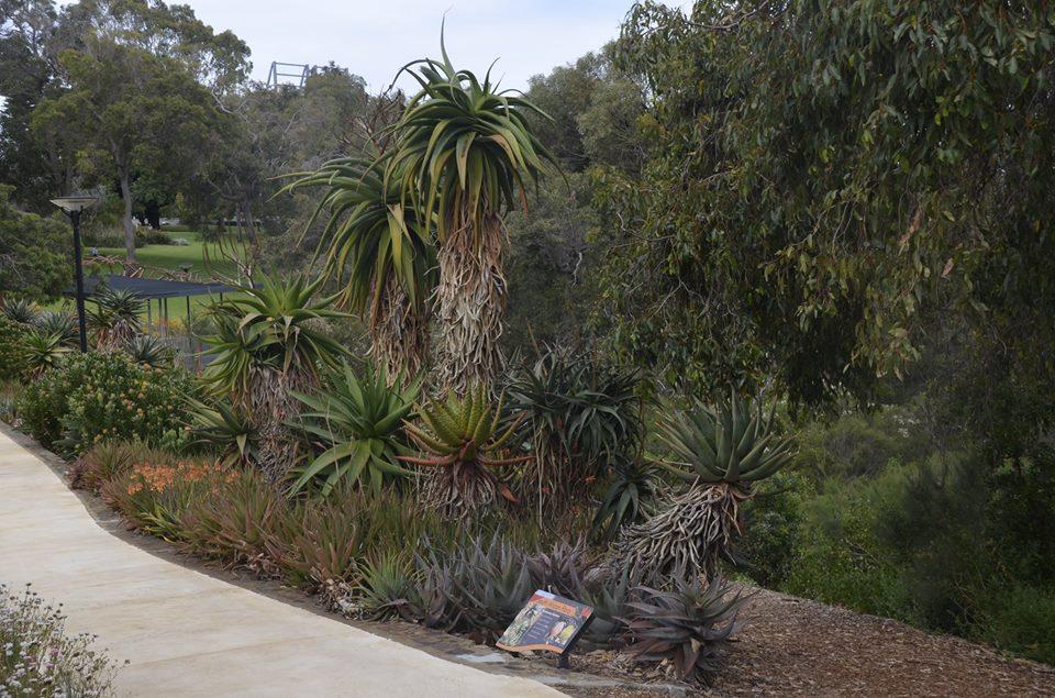 Jardin botanique à Kings park