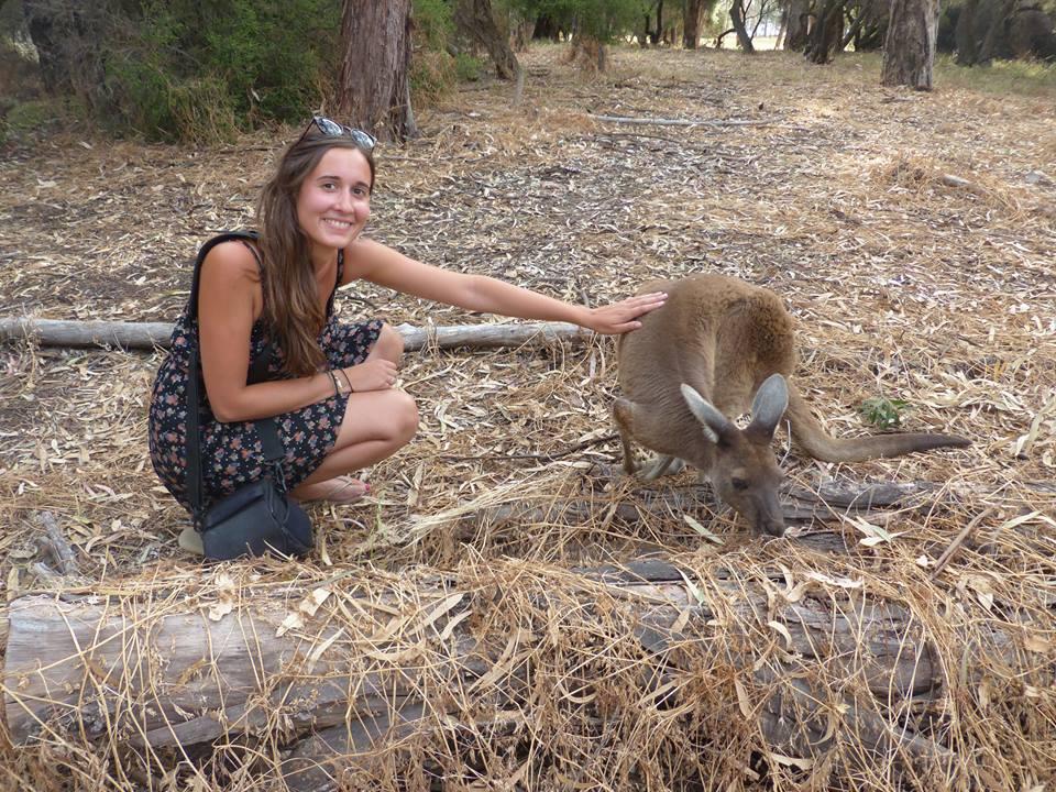 Premier kangourou à Herisson Island