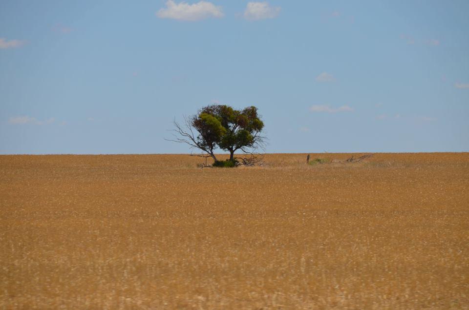 Région de la Wheatbelt.