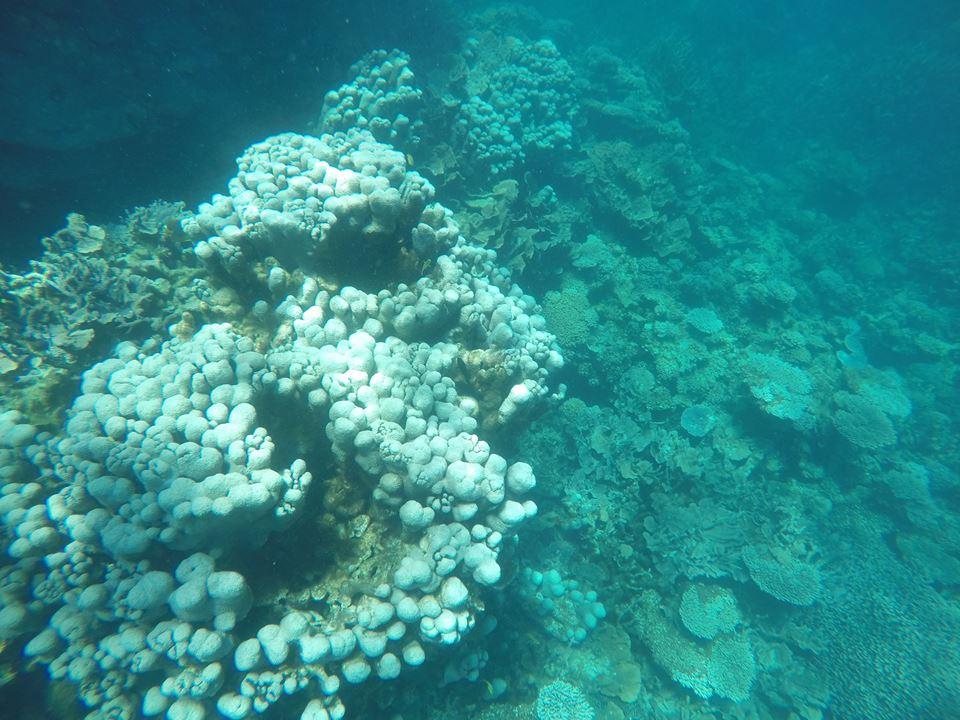Coraux du récif de Coral Bay