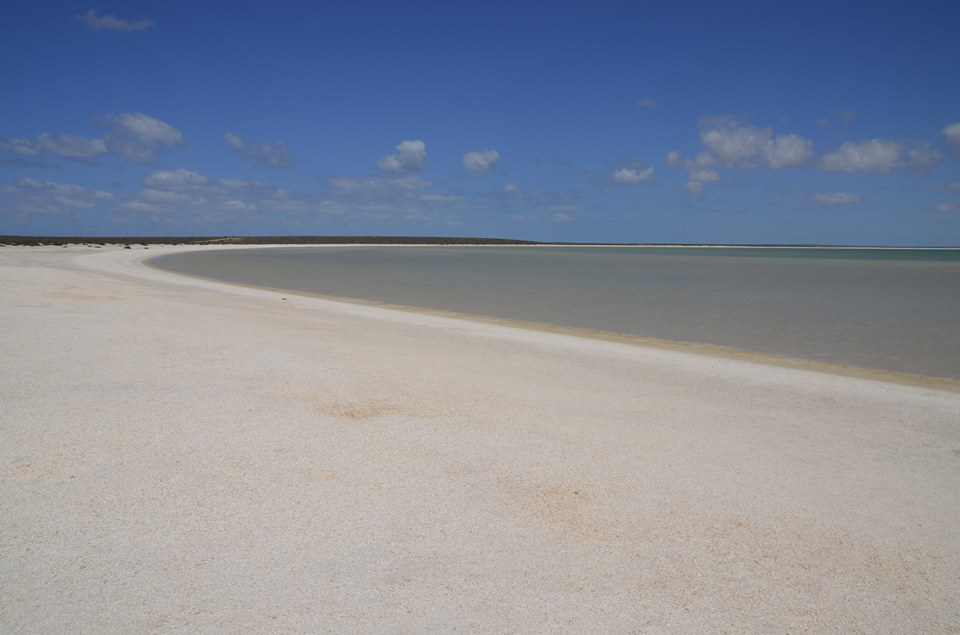 Shell Beach - Shark Bay