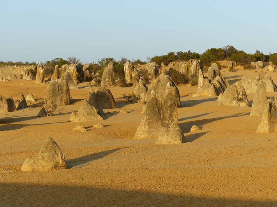 Menhirs au Pinnacles Desert