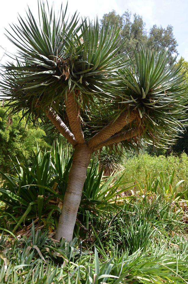 Adelaïde Botanic Garden