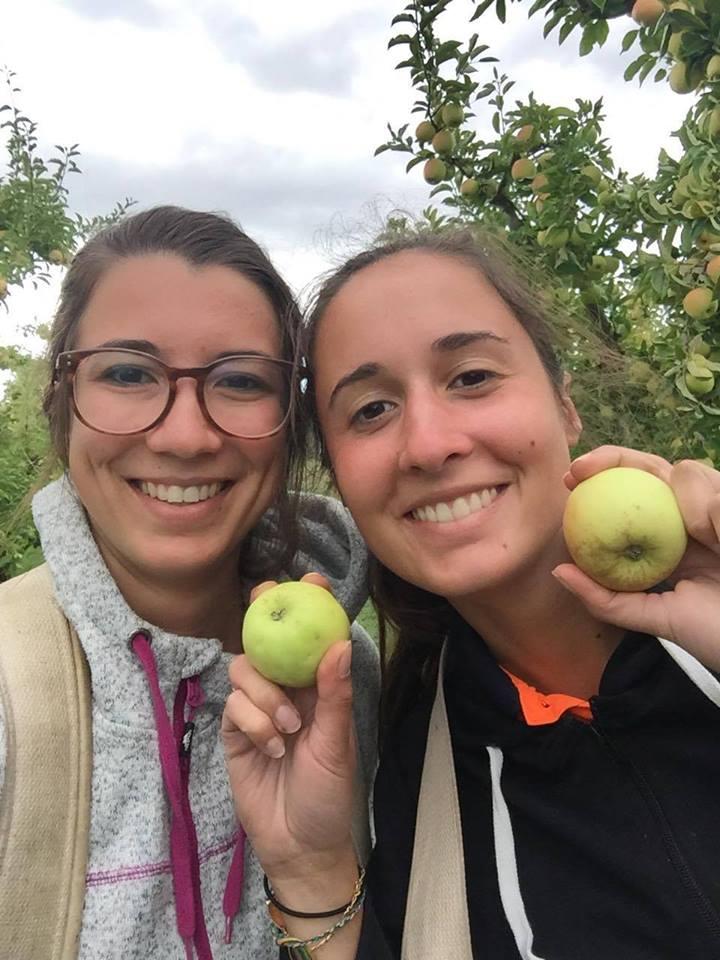 Apple picking, Tasmania
